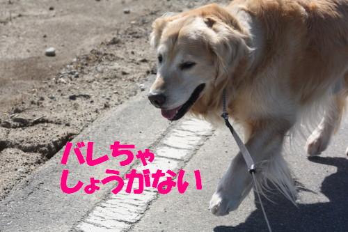 bu-51480001.jpg