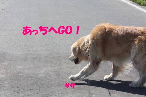 bu-51490001.jpg