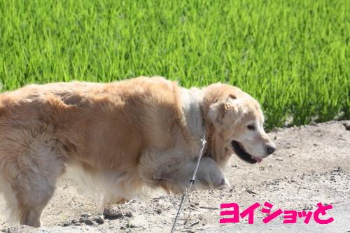 bu-51510001.jpg