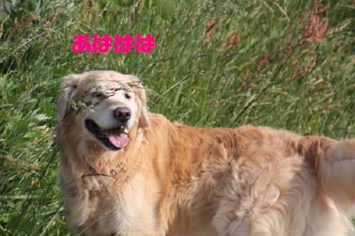 bu-5164a0001.jpg