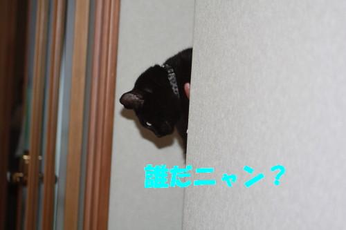 bu-51800001.jpg