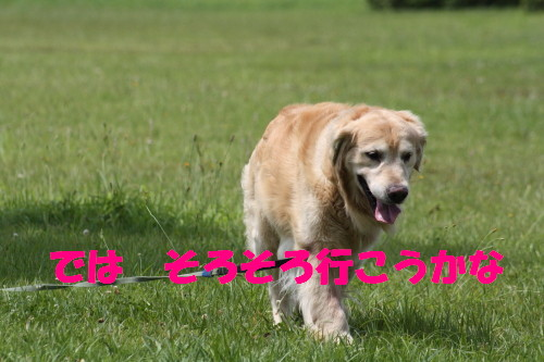 bu-52680001.jpg
