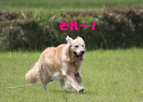 bu-52690001.jpg