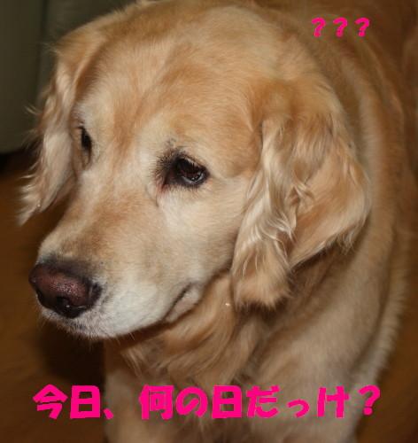 bu-52890001.jpg