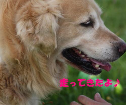 bu-52960001.jpg