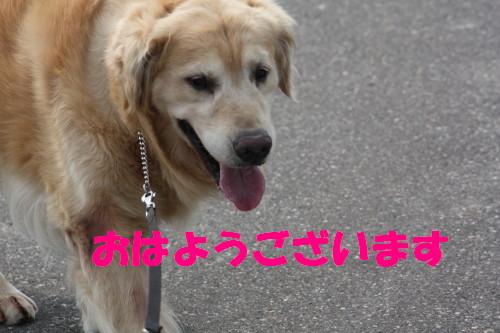 bu-53100001.jpg