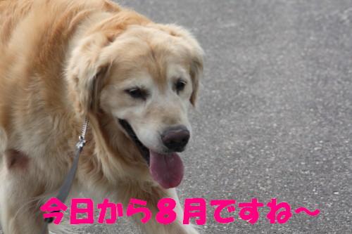 bu-53110001.jpg
