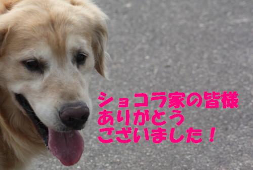 bu-53350001.jpg
