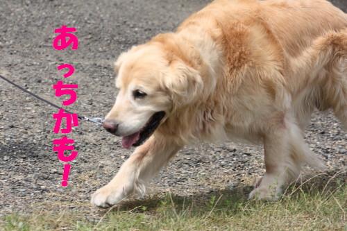 bu-53510001.jpg