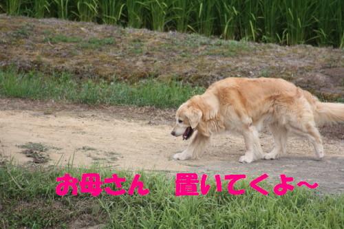 bu-53560001.jpg