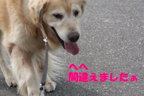 bu-53670001.jpg