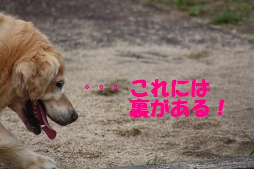 bu-53740001.jpg