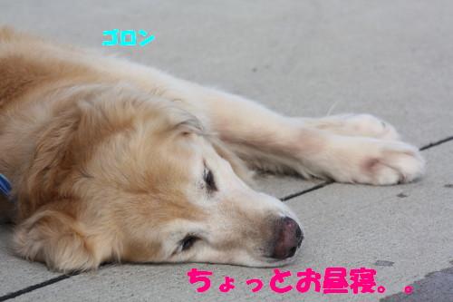 bu-53980001.jpg