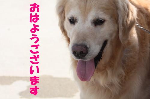 bu-54100001.jpg