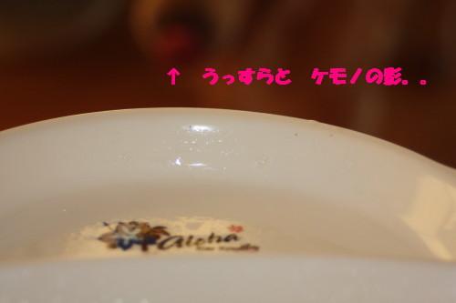 bu-54250001.jpg