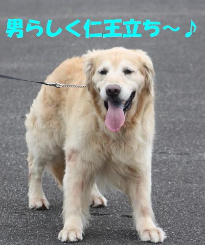 bu-54330001.jpg