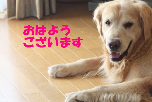 bu-55190001.jpg