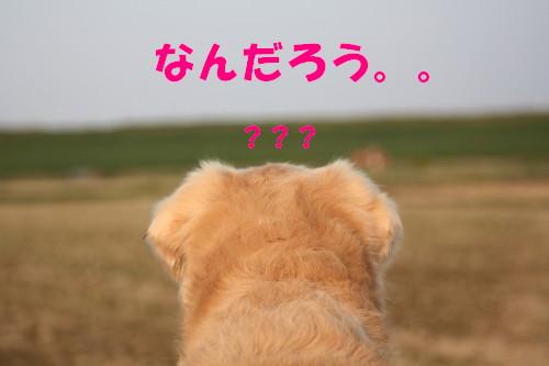 bu-55300001.jpg