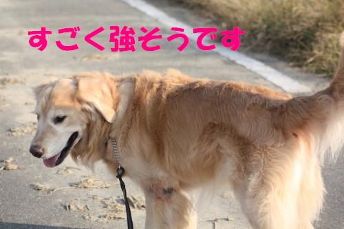 bu-55330001.jpg