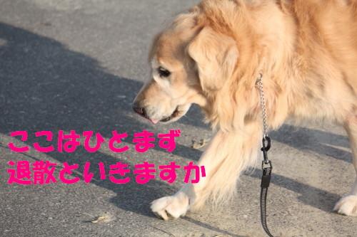 bu-55340001.jpg