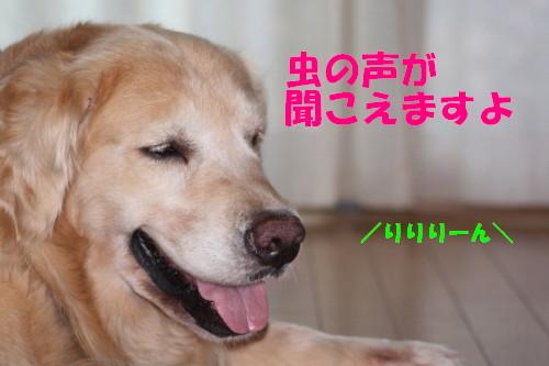 bu-55470001.jpg