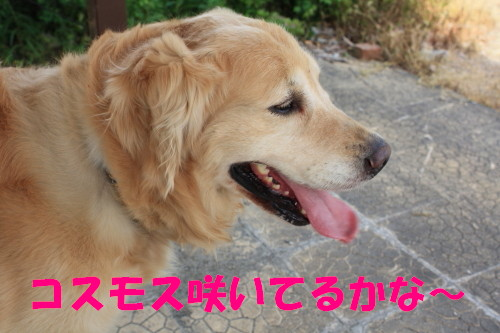 bu-55500001.jpg