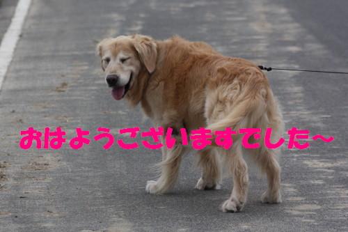 bu-55970001.jpg