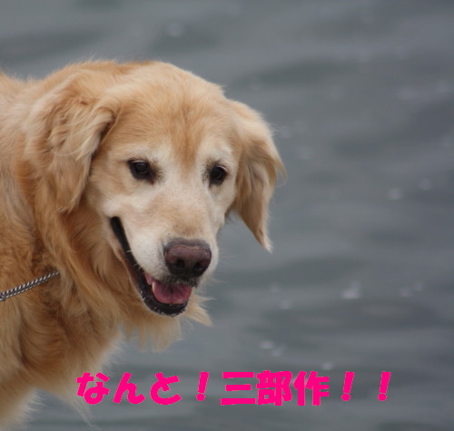 bu-56430001.jpg