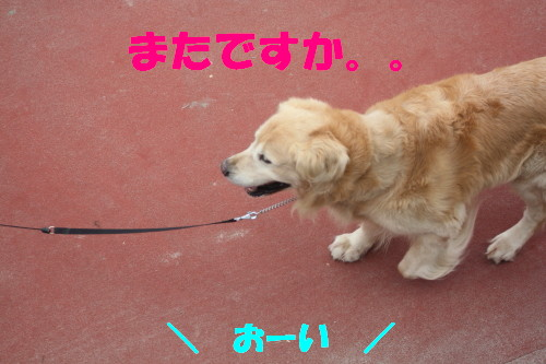 bu-56450001.jpg