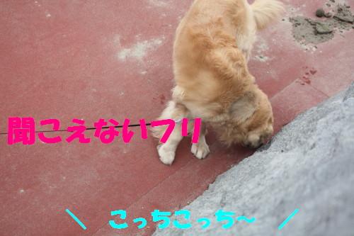 bu-56460001.jpg