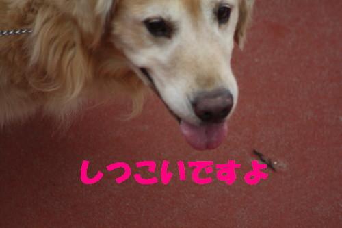 bu-56470001.jpg