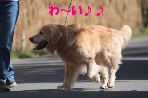 bu-56830001.jpg