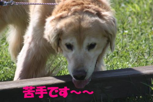 bu-56960001.jpg