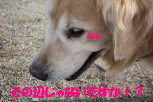 bu-57510001.jpg