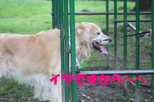 bu-57830001a.jpg