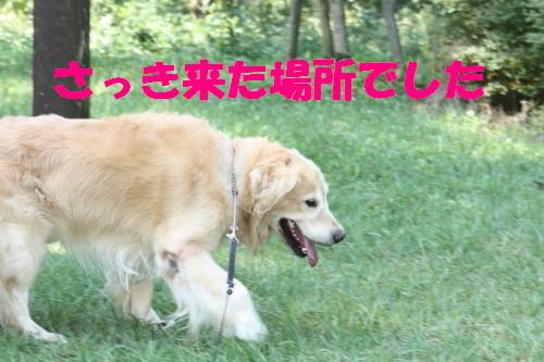 bu-58380001.jpg