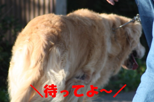 bu-59380001.jpg