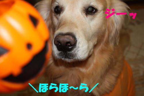 bu-59480001.jpg