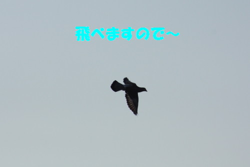 bu-60140001.jpg
