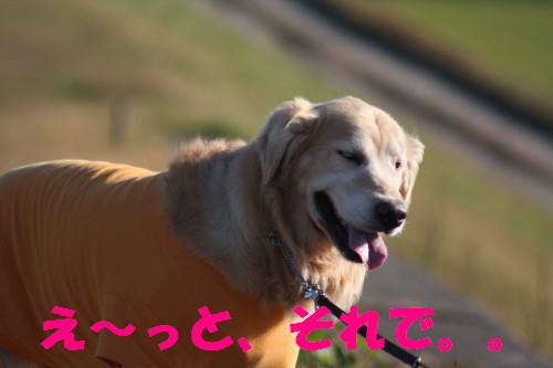 bu-60380001.jpg