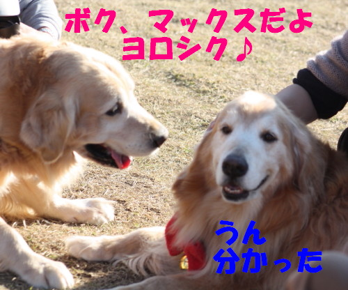 bu-61480001.jpg