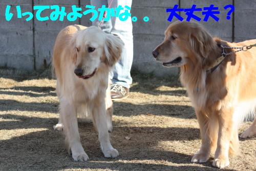 bu-61710001.jpg