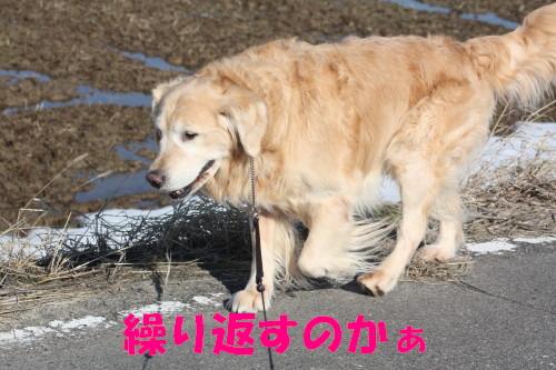 bu-68100001.jpg