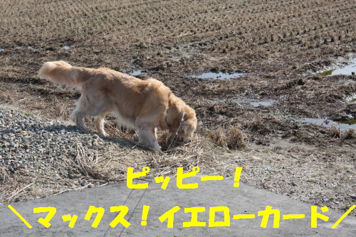 bu-68220001a.jpg