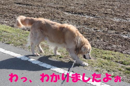 bu-68230001.jpg
