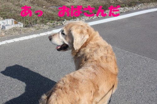 bu-68310001.jpg