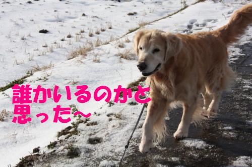 bu-68730001.jpg