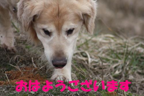 bu-70350001.jpg