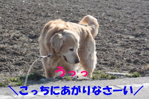 bu-70610001.jpg