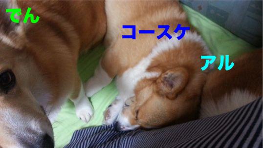 1_201312211652509c1.jpg